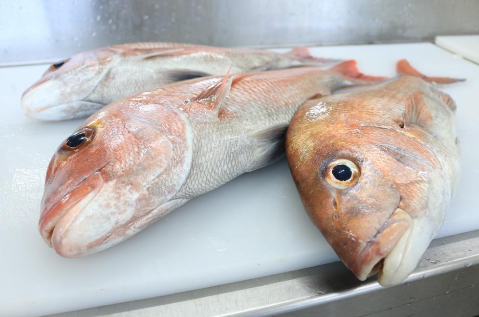 金沢鮮魚の魚